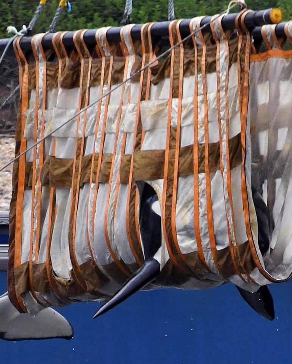 walvisgevangenis