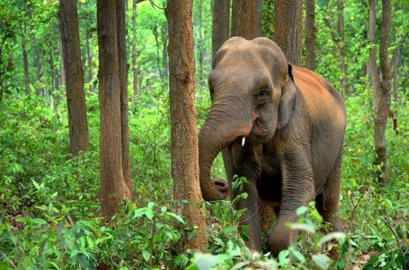 mens-olifant netwerk
