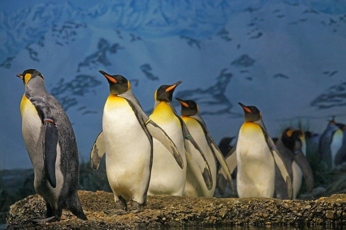 pinguïnpaartje