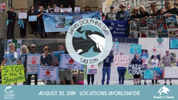 Japan Dolphins Day 2019