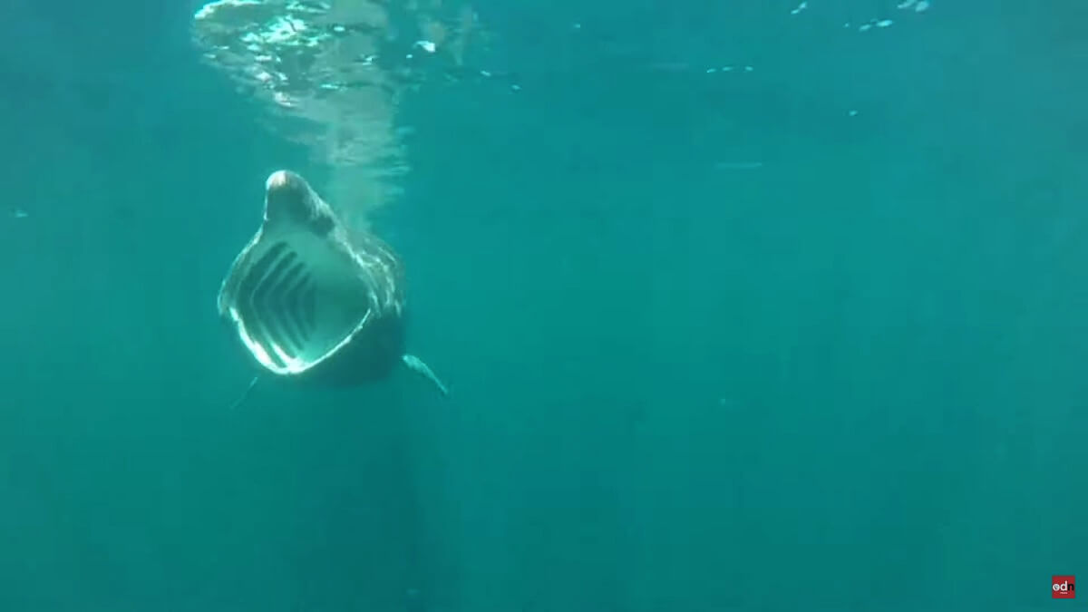 SharkCam