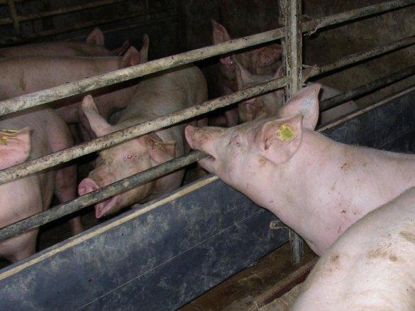 verbod op vee-industrie