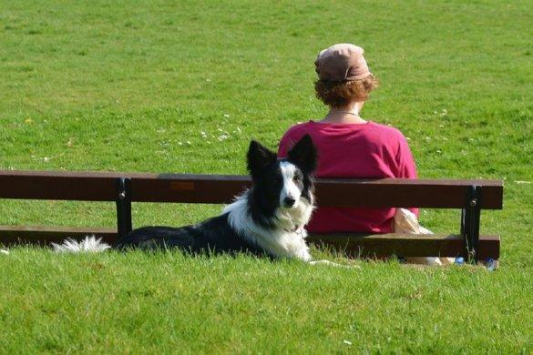Met een hond leef je langer