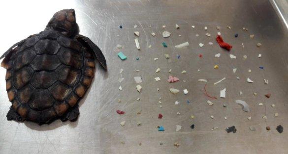 dode schildpad