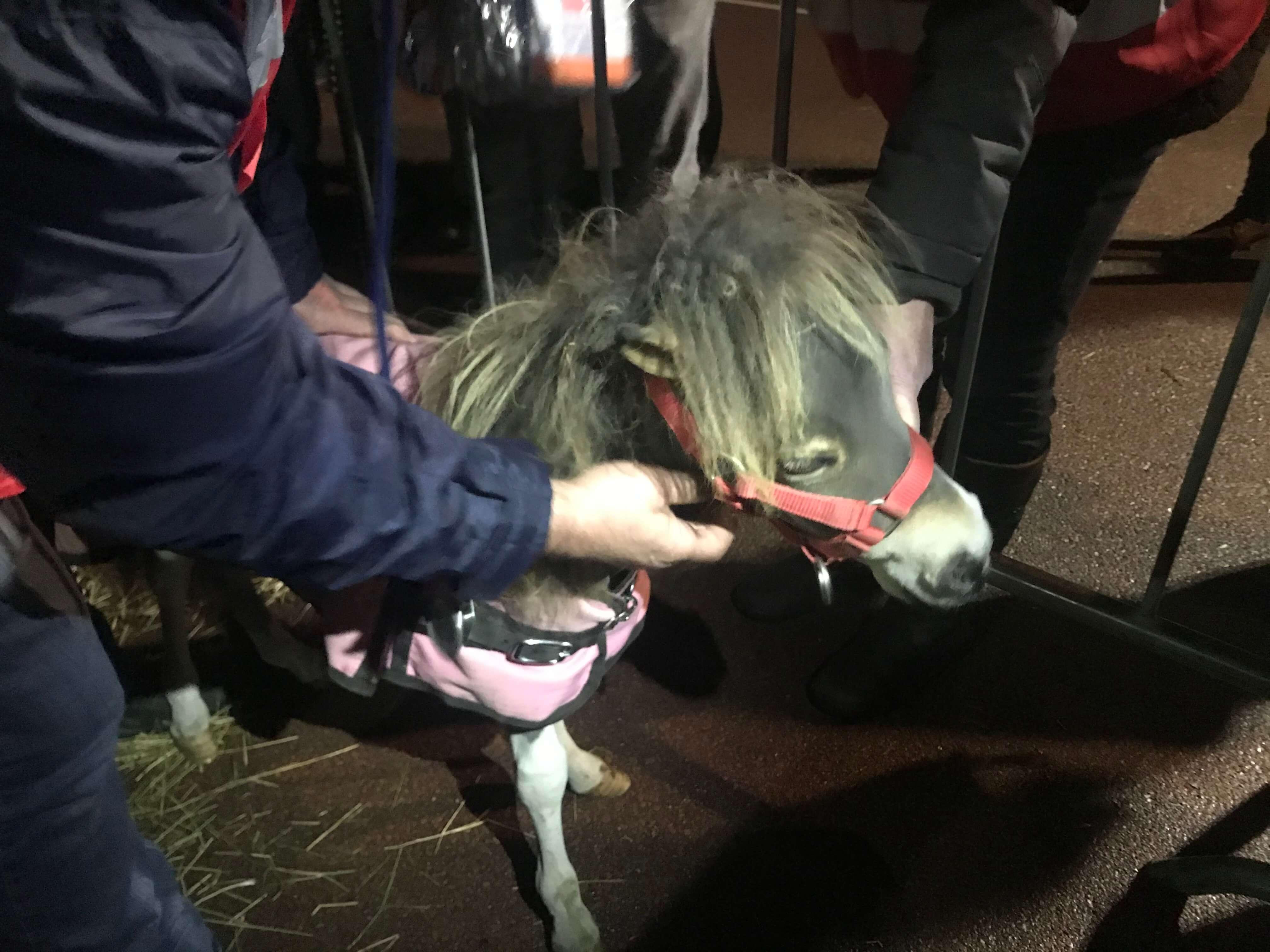 paardenmarkt Hedel 2019