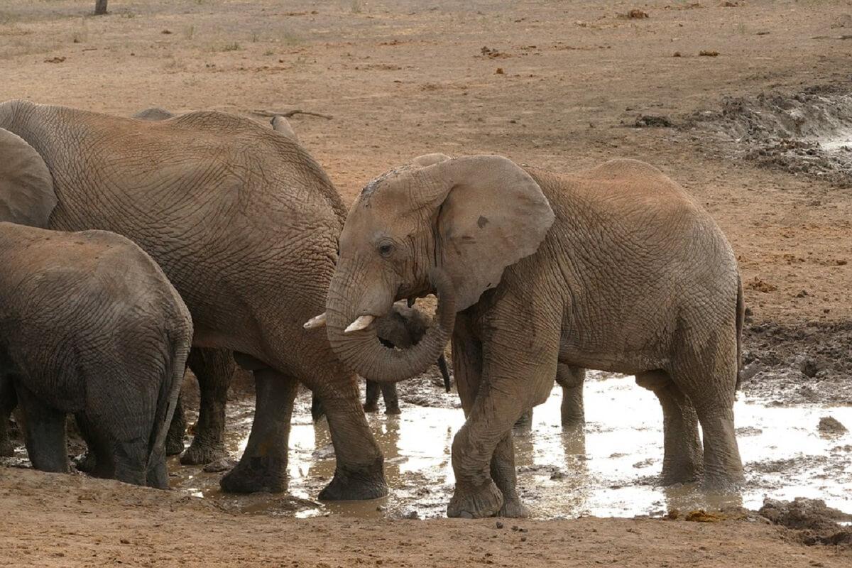 olifanten krijgen bijna nooit kanker