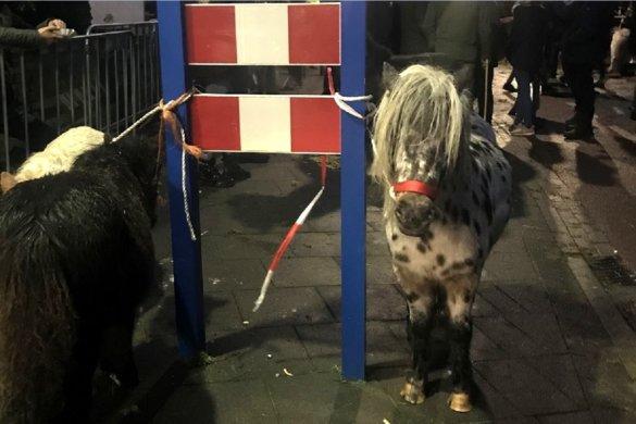 Stop 300 jaar dierenleed op paardenmarkten