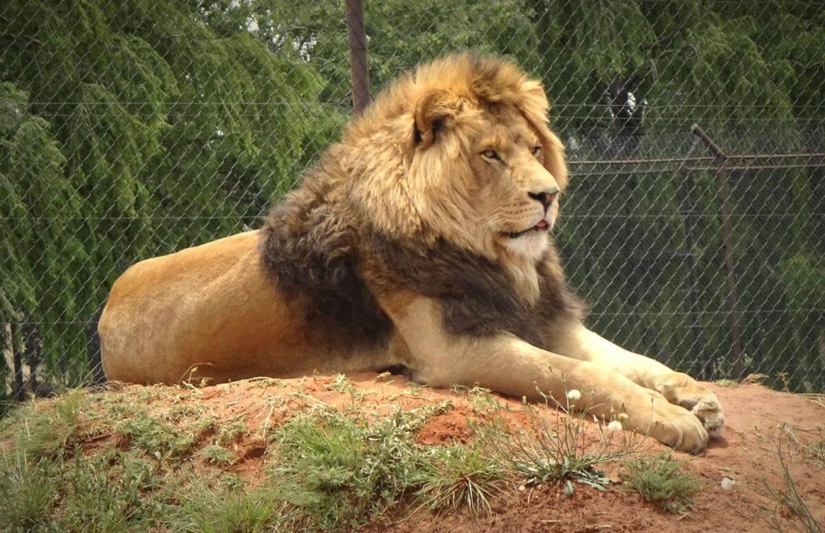 Nieuwe status wilde dieren Zuid-Afrika zorgwekkend