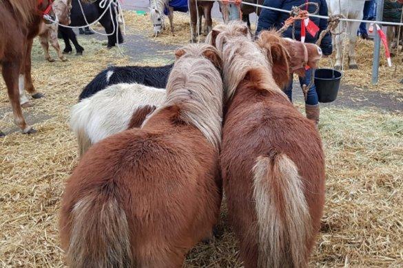 Paardenmarkt Goor 13 december 2019