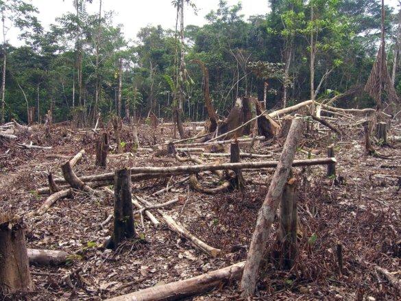 Tropische regenwoud