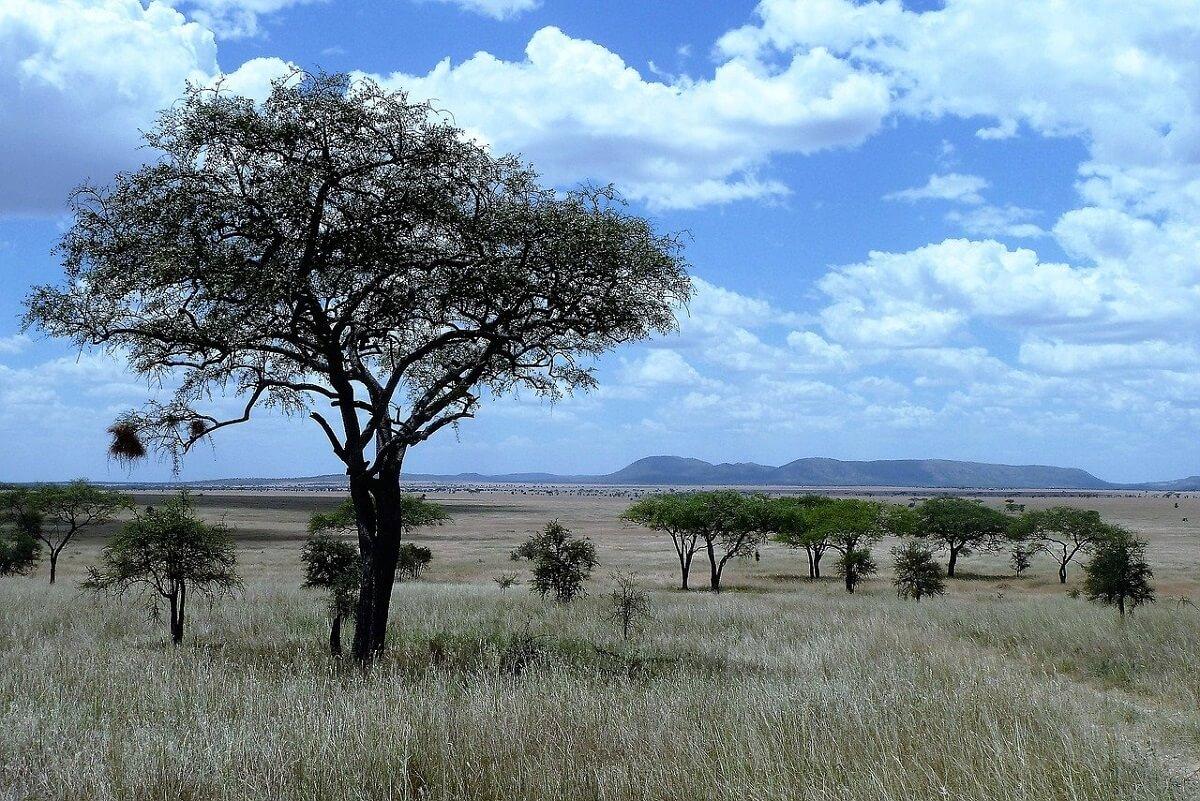 savanne