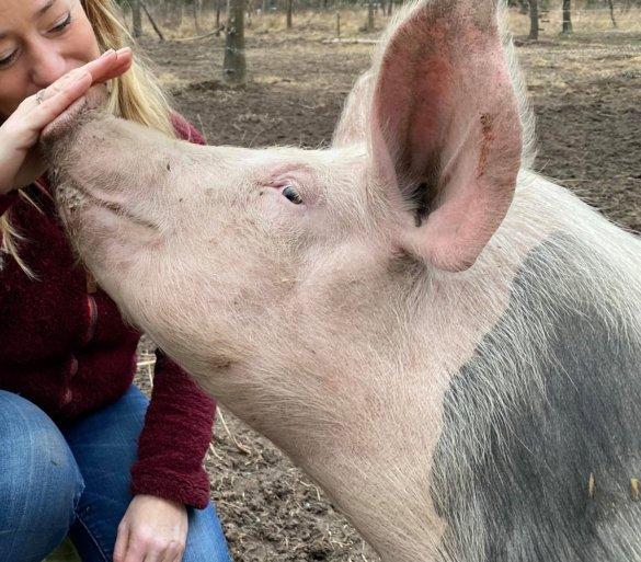 sponsor Esther voor de varkens