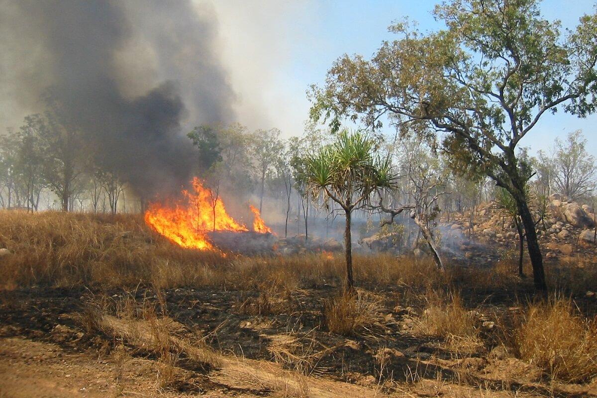 miljard dieren slachtoffer branden Australië