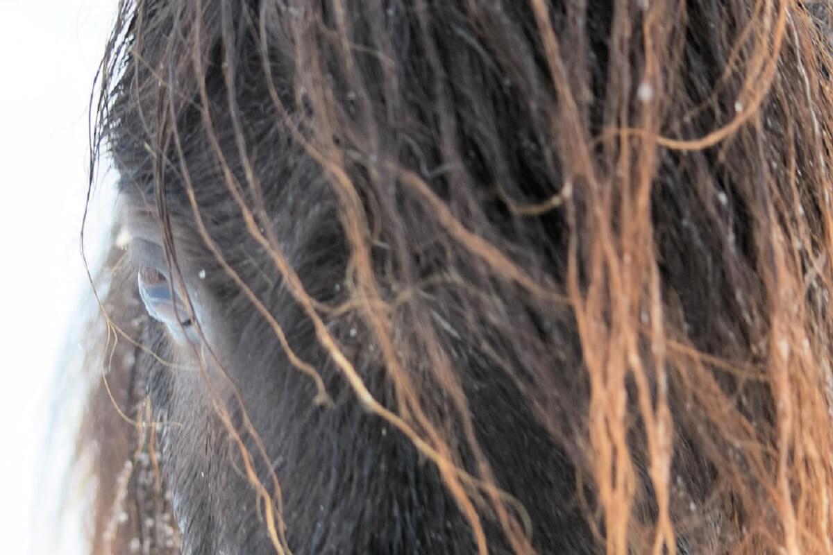 pony Blacky