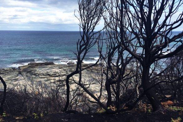 500 miljoen dieren dood door branden NSW