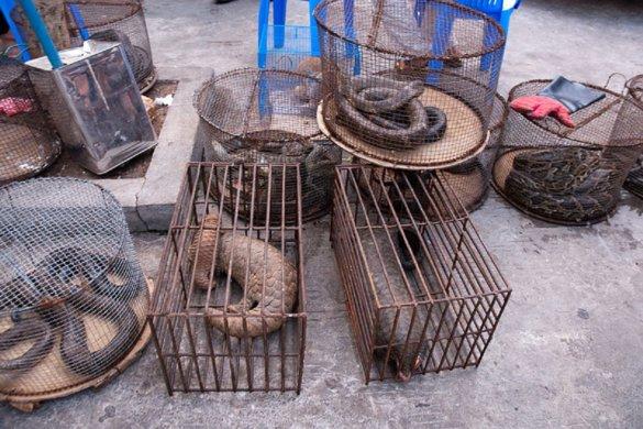 Illegale handel in wilde dieren bedreigt ook de mens