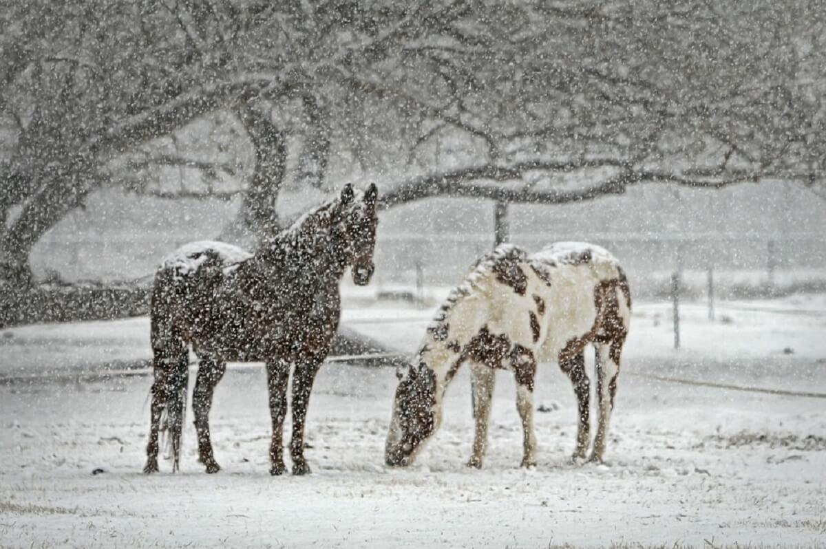 zet paarden samen