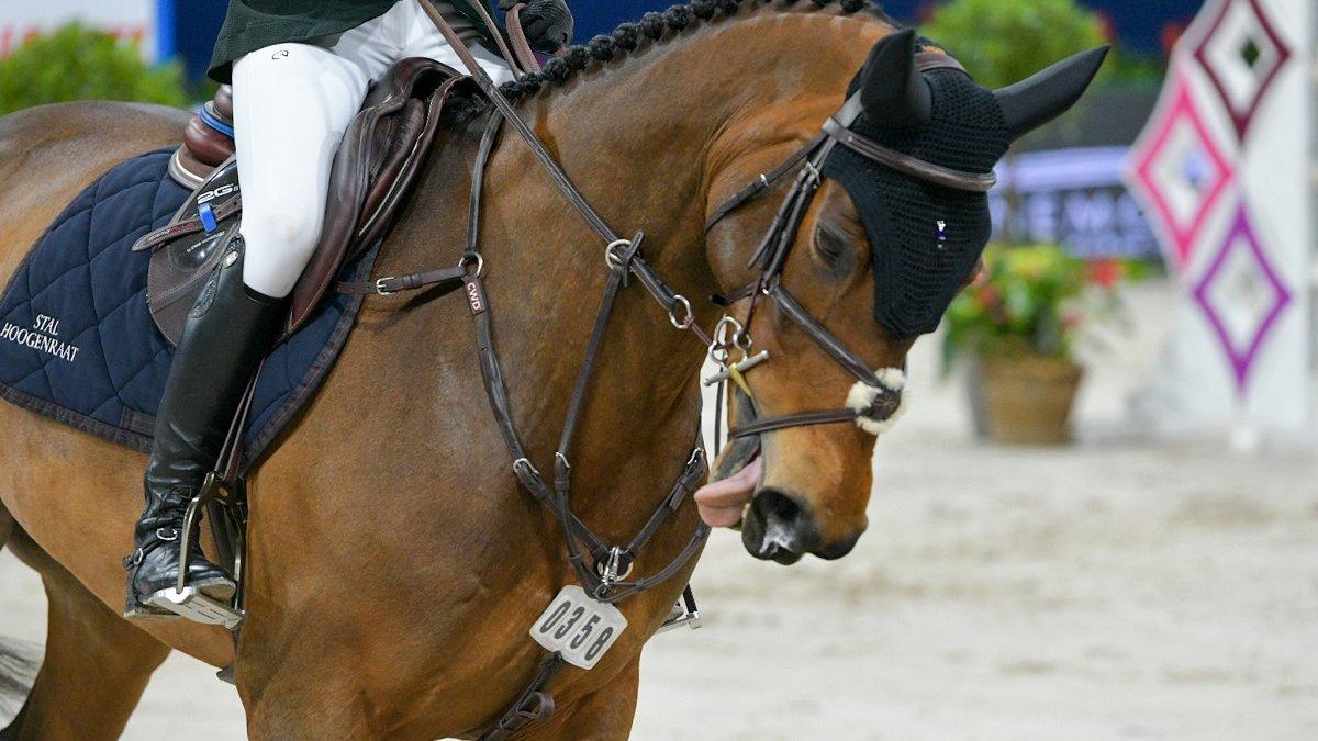 pijnlijke bitten paardensport