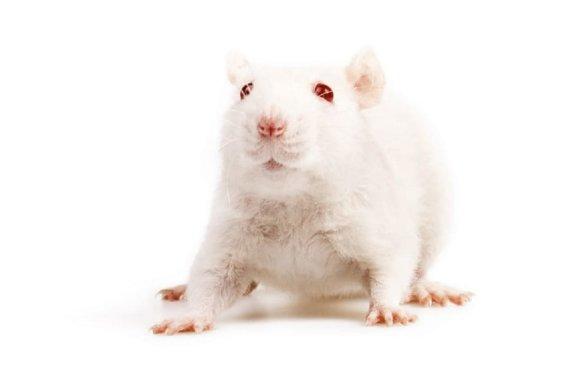 Europees Parlement stemt voor toekomst zonder dierproeven
