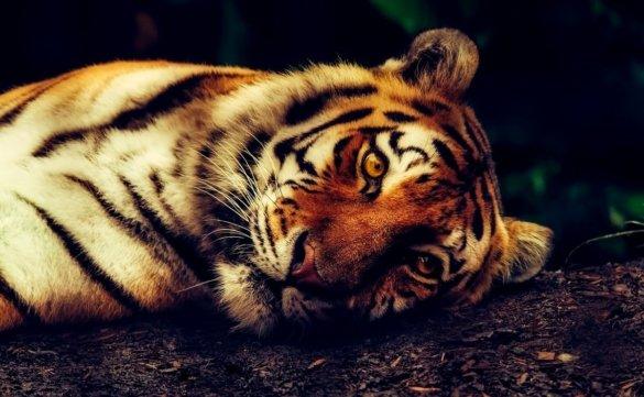 exotische dieren