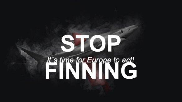 Stop Finning - Stop de handel in haaienvinnen