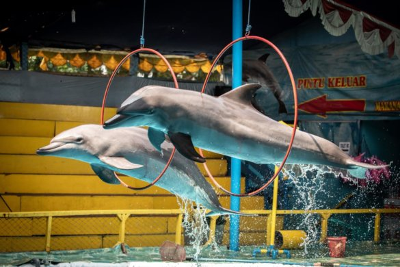 dolfijnencircus