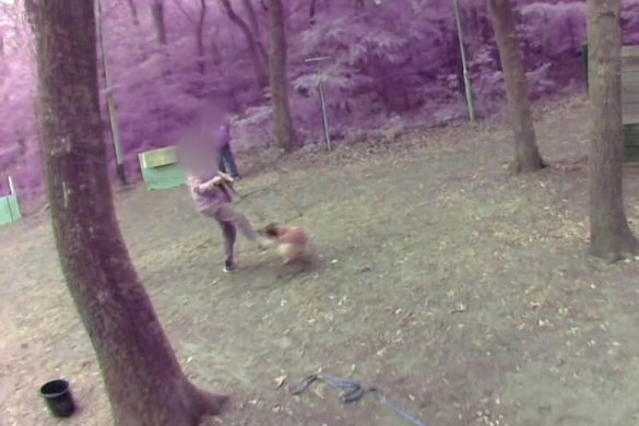 ernstige mishandeling honden bij KNPV