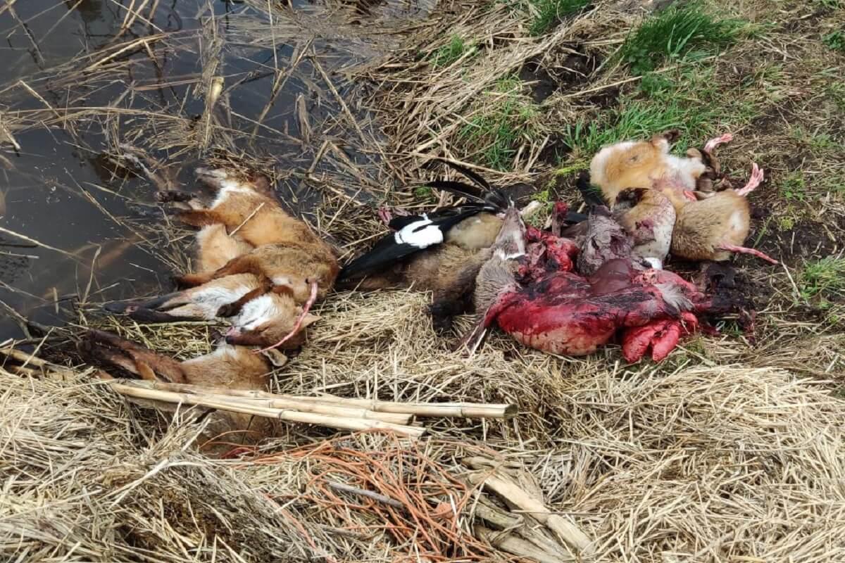 dode dieren gedumpt