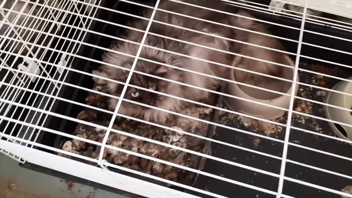 49 zwaar verwaarloosde katten en 5 stinkdieren in beslag genomen