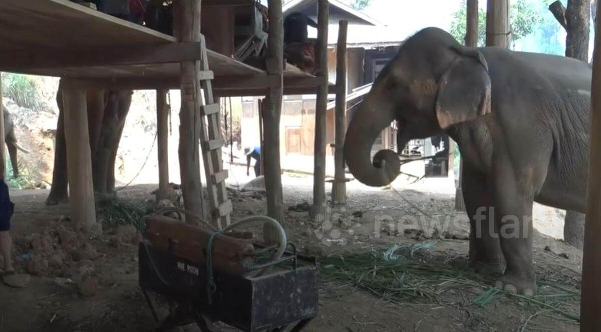 Thais olifantenpark