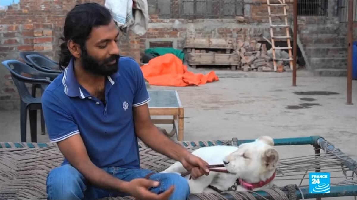 grote katachtigen populair als huisdier in Pakistan