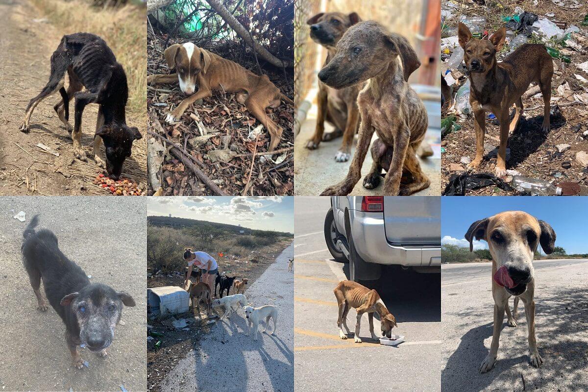 vrokken voor honden op Curaçao