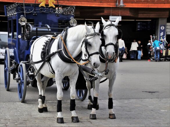 paardenkoetsen