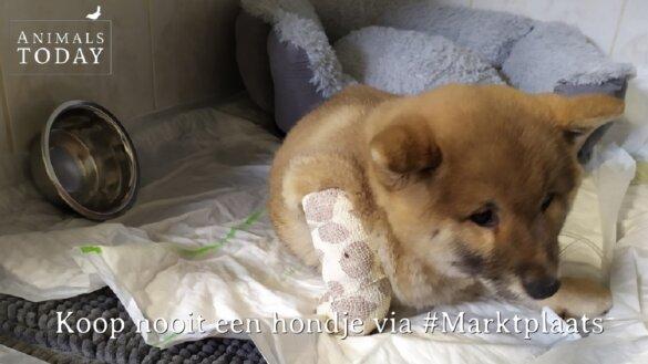 Koop geen hondjes via Marktplaats