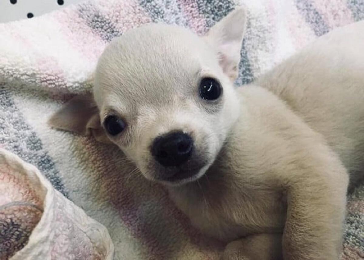 Puppy in dierenwinkel