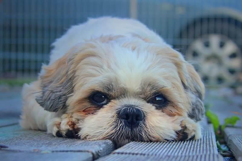 verminkte hond aangetroffen in Middelburg