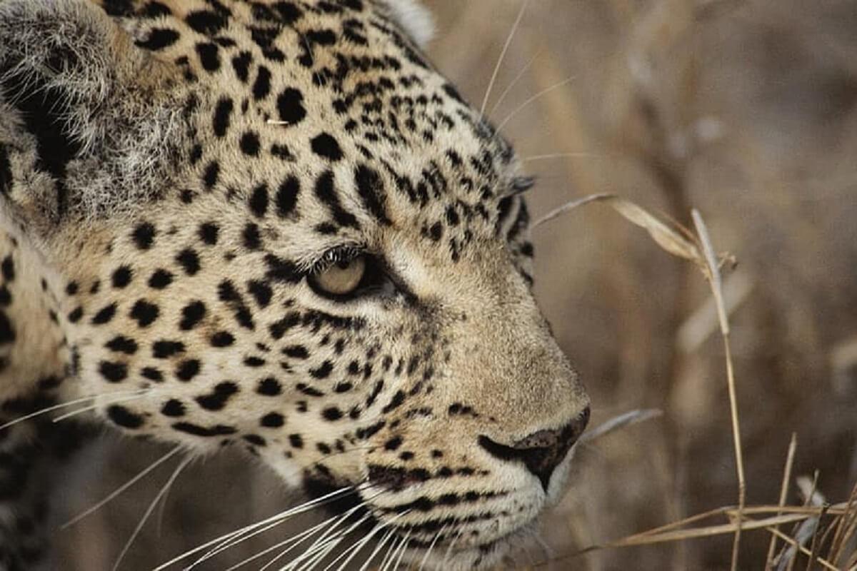 COVID-19 brengt de bescherming van dieren en ecosystemen in gevaar