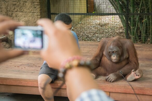 stop vermaak met wilde dieren in gevangenschap