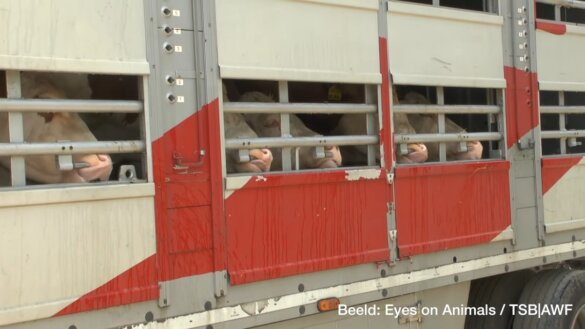 geen veetransport meer naar derde landen