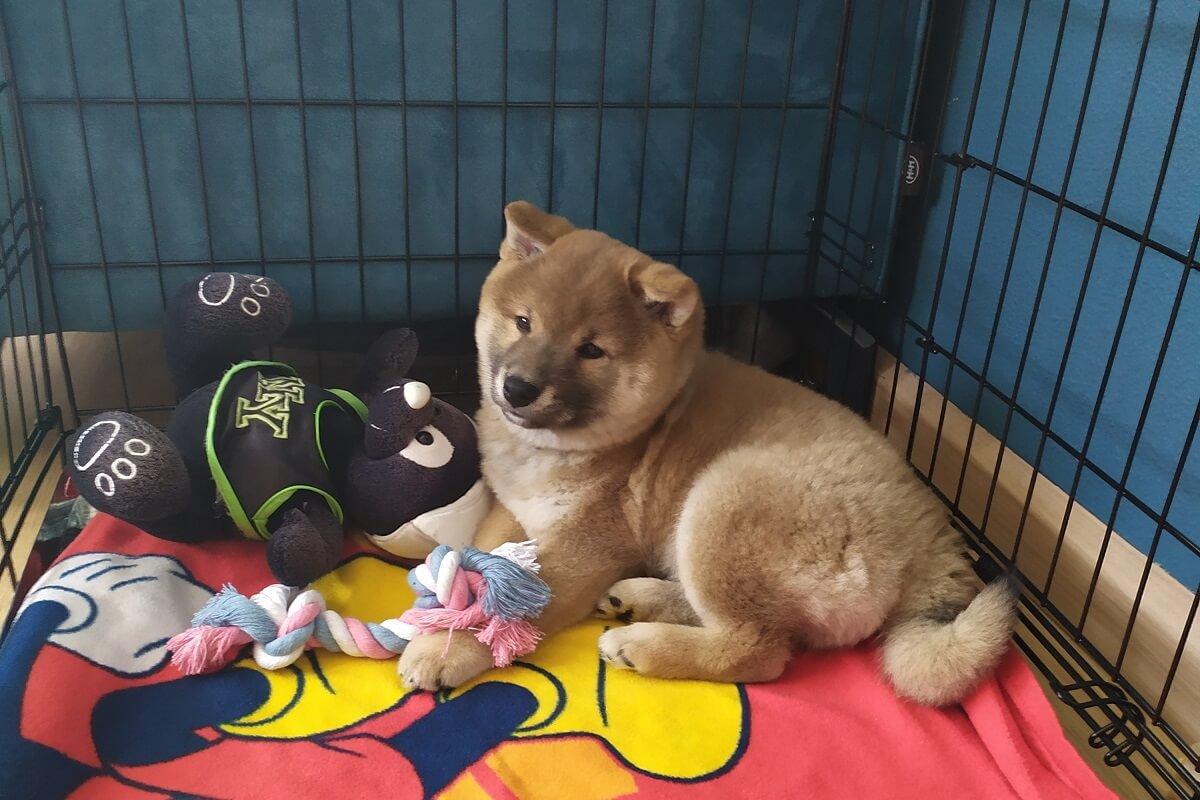 handel in puppy's