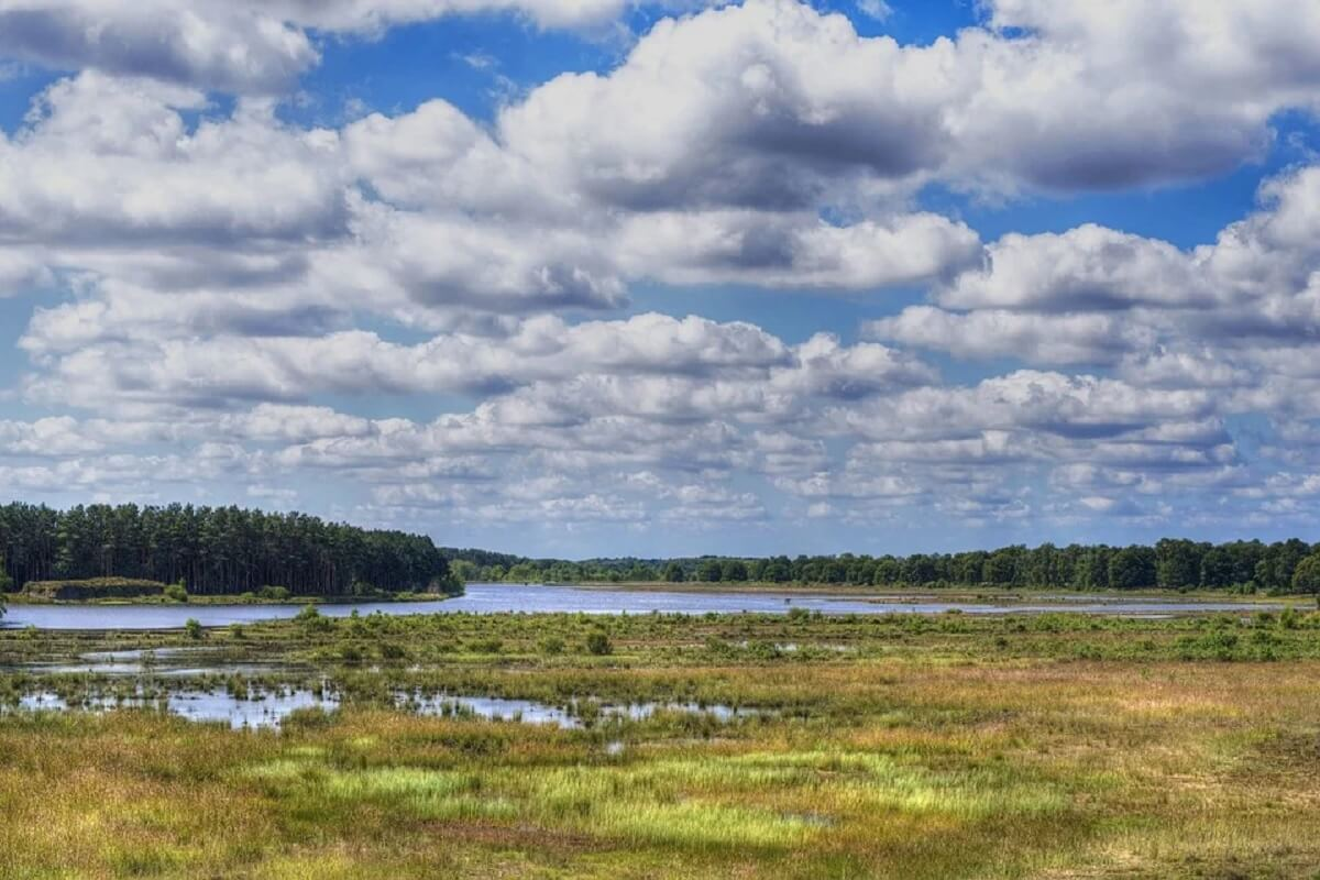 Drentse natuurgebieden