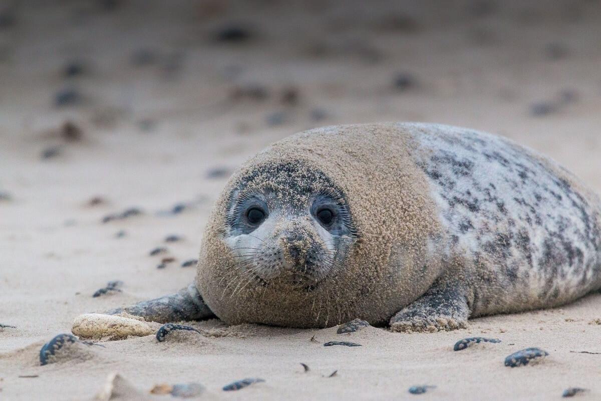 laat zeehonden op het strand met rust