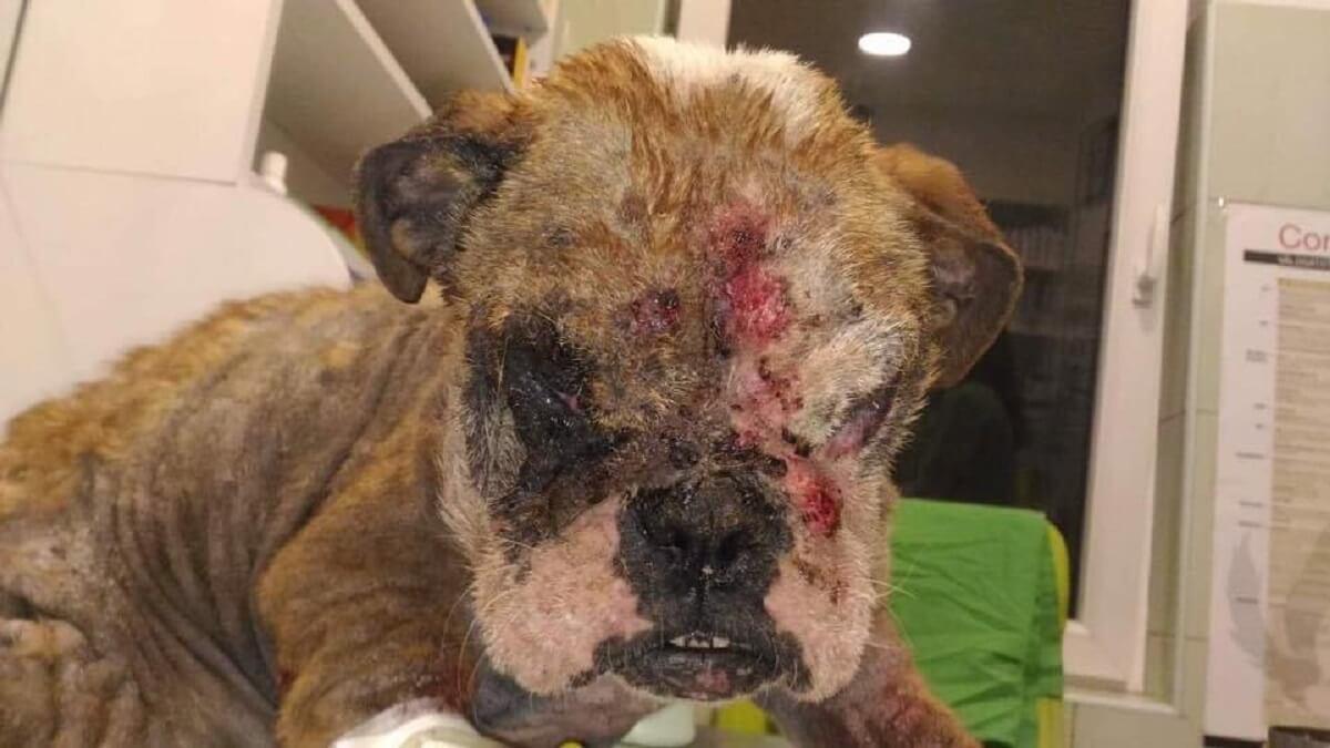 Aangifte tegen foute puppyhandelaar NVWA medeplichtig