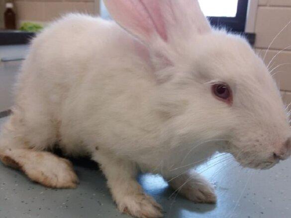 Wie gooide(n) dit konijntje in de glasbak?