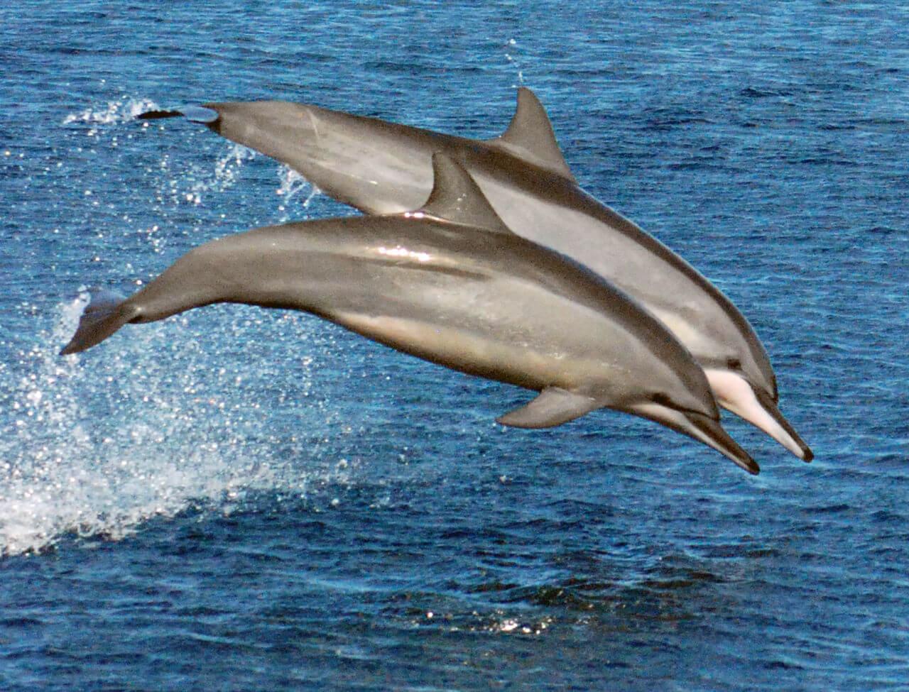 Gemartelde langsnuitdolfijnen en zeehond spoelen dood aan op Griekse kust