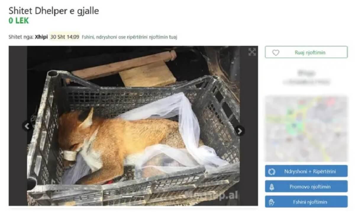 vos op Albanese marktplaats
