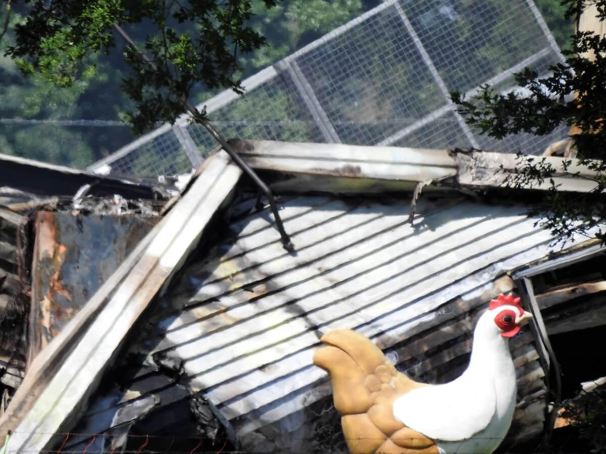 stalbrand Barneveld kost mogelijk tienduizenden kippen het leven