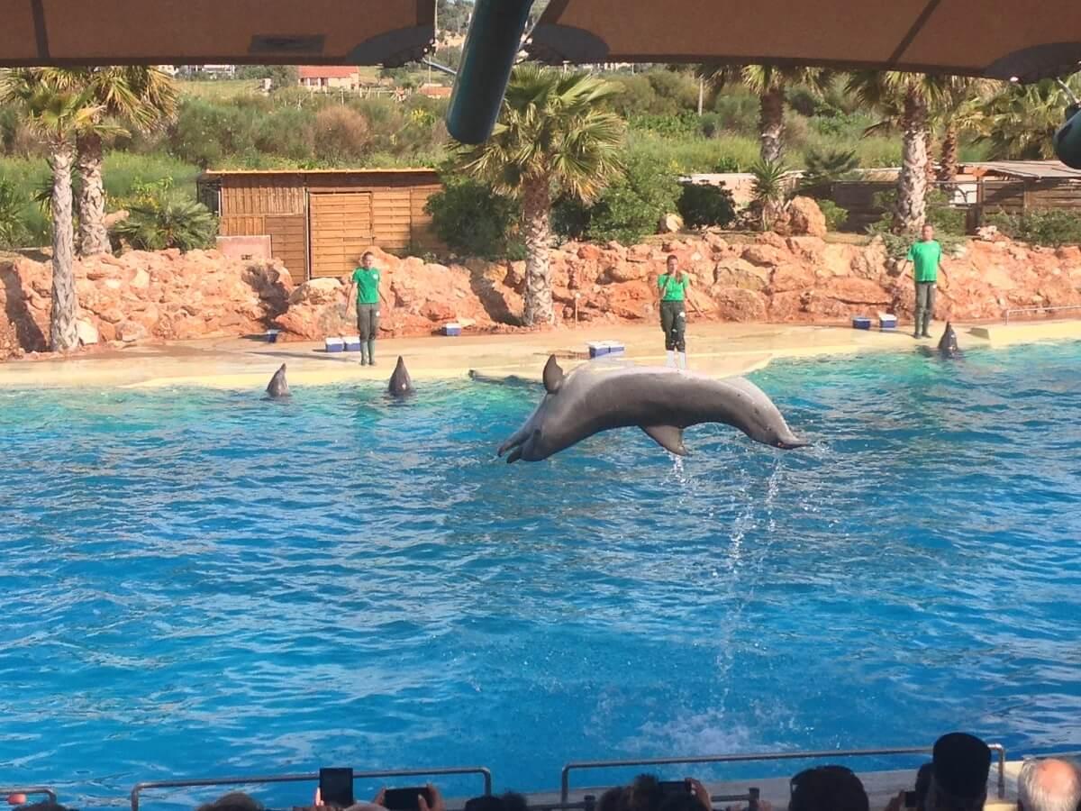 Attica Zoological Park Athene