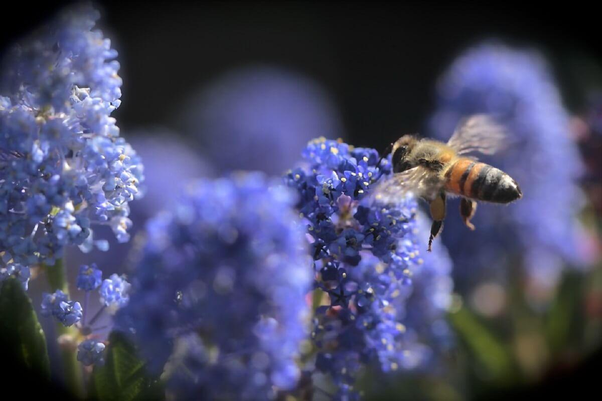 Brussel faalt in bescherming bijen