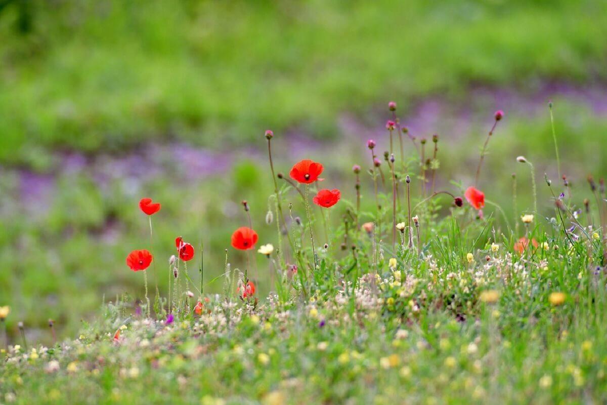 bloemrijke berm veldbloemen
